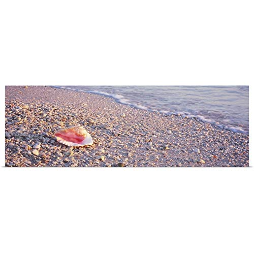 GREATBIGCANVAS Poster Print Entitled Seashell on The Beach, Lovers Key State Park, Fort Myers Beach, Gulf of Mexico, Florida by 48