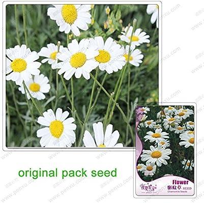 120 semillas / pack, flores de manzanilla, semillas de plagas y revienta-bonsai en macetas de plantas, semillas de manzanilla: Amazon.es: Jardín