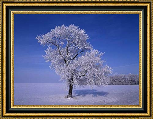 Canada, Dugald, Hoarfrost on Cottonwood Trees by Mike Grandmaison - 18.25