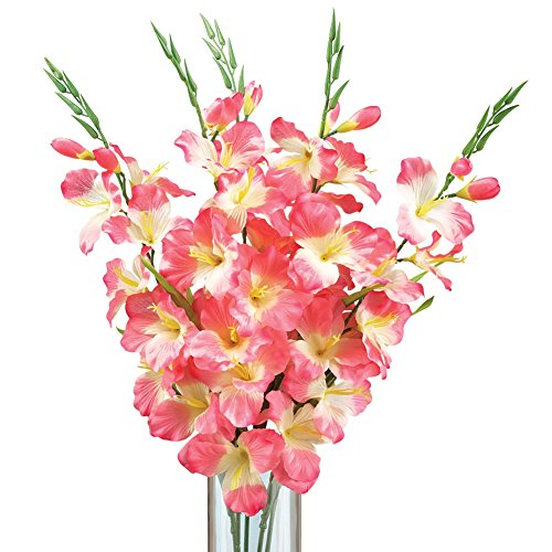 Gladiolus Bush Flower Stems Arrangement Bush - Set Of 5, Pink