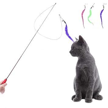 Bloomma Teaser y Ejercicio para Gatos y Gatitos de Cat Toy Interactive: Amazon.es: Hogar