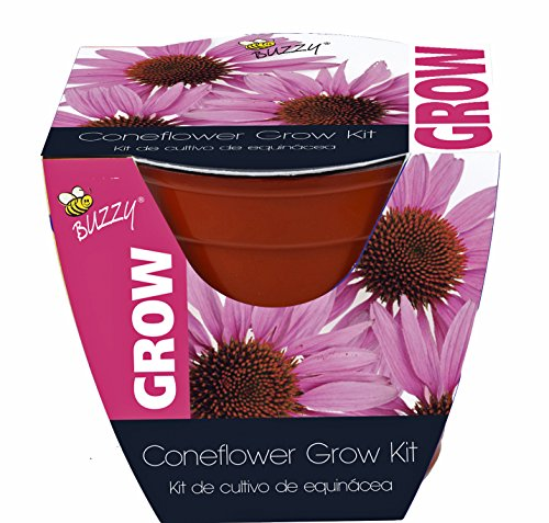 (Buzzy Coneflower Grow Kit, 4-In. Plastic Pot Non-GMO Garden Starter Set Pot color varies between Purple and Red ~ USA SELLER ~ FAST SHIPPING ~)