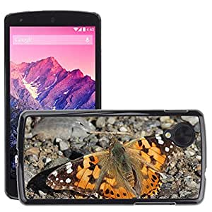 Hot Style Cell Phone PC Hard Case Cover // M00116509 Painted Lady Butterfly Sun Insect // LG Nexus 5