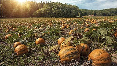 Wilderness Poets Oregon Grown Pumpkin Seeds - Organic, Raw, Heirloom (25 Pound) by Wilderness Poets (Image #5)