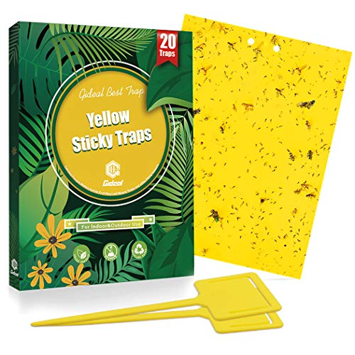 Gideal 20-Pack Dual-Sided Yellow