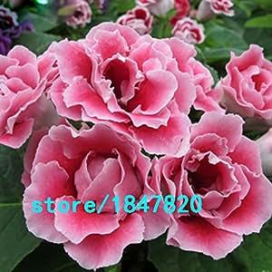 Nueva venta caliente! 9 colores Gloxinia Semillas de plantas perennes de floración Sinningia Speciosa Bonsai Balcón, 100 semillas / Lot rosado