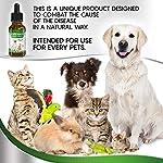 Natural ANTIBIOTICS for Dogs / ANTIBIOTICS Alternative for Pets/ Kennel Cough Medicine for Dogs / UTI Treatment / ANTIBIOTICS for Cats 10