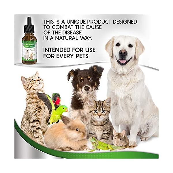 Natural ANTIBIOTICS for Dogs / ANTIBIOTICS Alternative for Pets/ Kennel Cough Medicine for Dogs / UTI Treatment / ANTIBIOTICS for Cats 2