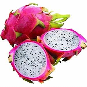 Ncient 10 Semi Sementi di Dragon Fruit Frutto del Drago Semi di Frutta Fiori Rari Piante Profumati per Orto Giardino Balcone Interni ed Esterni 8 spesavip