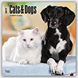 2017 Monthly Wall Calendar - Cats & Dogs