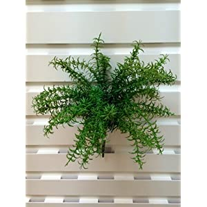 "19"" UV Protected Rosemary Bush Green (Pack of 12) 23"