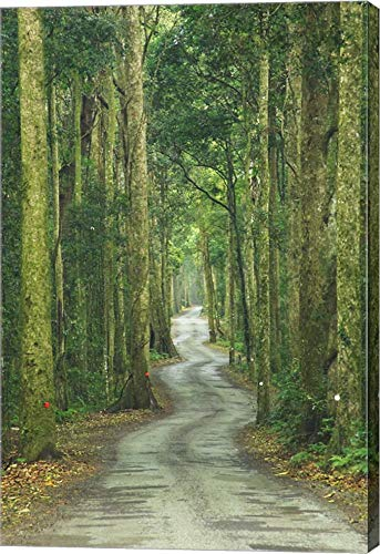 Road Through Rainforest, Lamington National Park, Gold Coast Hinterland, Queensland, Australia by David Wall/Danita Delimont Canvas Art Wall Picture, Gallery Wrap, 17 x 26 inches - Lamington National Park