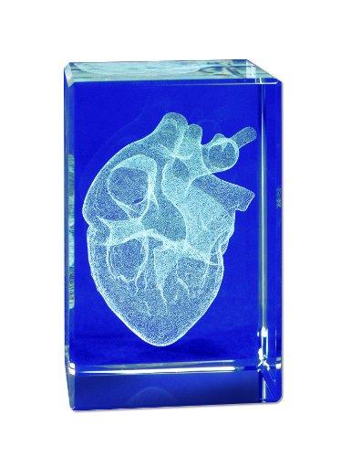 3B Scientific MAG13G Medart Glass Block Heart Model, 2
