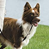 Gentle Leader Dog Head Collars - Training Stop Pulling Lunging Unwanted behavior(Small - 25lbs)