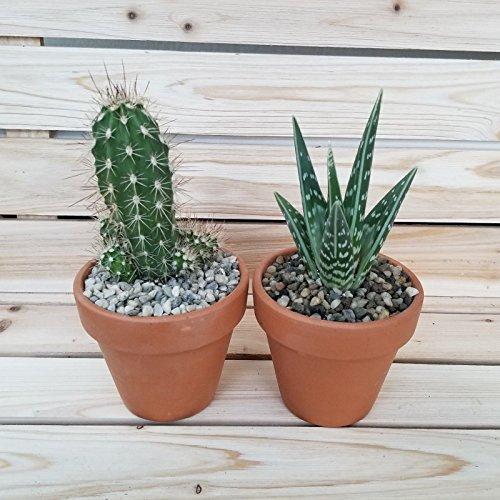 DIY Succulent terracotta 3.5