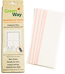 GreenWay Window Fly Trap - 12 Boxes - 48 Fly Glue Traps | Heavy Duty Glue, Safe, Non-Toxic with No Insecticides or Odor, Eco Friendly, Kid and Pet Safe