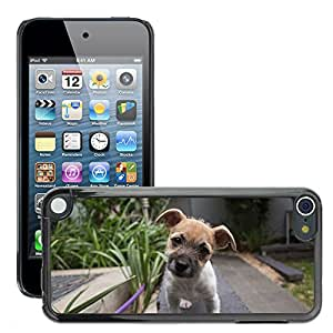 Super Stella Slim PC Hard Case Cover Skin Armor Shell Protection // M00148112 Puppy Dog Head Tilted Cute Adorable // Apple ipod Touch 5 5G 5th