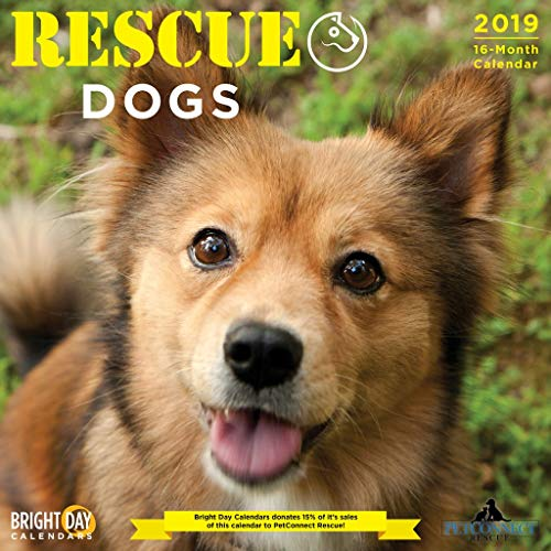 Wall Calendars for a Cause by Bright Day Calendars 16 Month Wall Calendars 12 x 12 inches Portion of Proceeds Go to a Cause (Rescue Dogs 2019)
