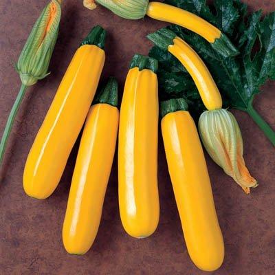 Zucchini 'Goldena' (Cucurbita Pepo L.) Vegetable Plant Seeds, Medium Early Heirloom : Garden & Outdoor