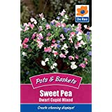 De Ree Pots & Baskets Sweet Pea Dwarf Cupid Mixed Flower Seeds for Gardens and Outdoors [ 2 Packet ] by De Ree