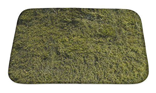Gear New Image Of Moss On The Tree Bath Mat, Microfiber, Foam With Non Skid Backing, 24