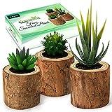 Artificial Succulent Plants Potted & Fake Cactus - Set of 3   Face Succulent Plants in Pots   Feaux Succulent Plants in Pots for Home, Desk, Bedroom, Kitchen, Bathroom, Bookshelf, Office Decorations