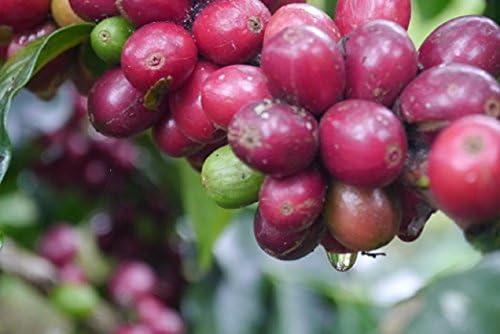 『野生』Kopi Luwak 焙煎豆160g イグノーベル賞を受賞したジャコウネコのコーヒー。インドネシア・アチェのガヨ高地の珈琲畑で収集した『野生』。珈琲好きのあの人への贈り物に最適。受注後に焙煎してお届けします。