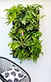 Expandable Green Wall w/ Built-in micro dripper (1)