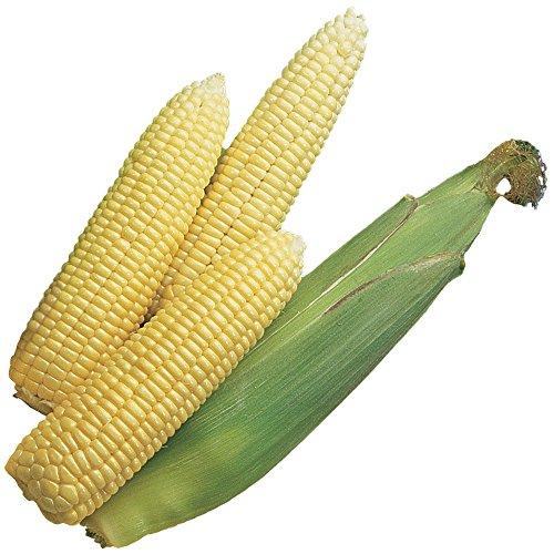 early corn - 1