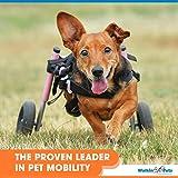 Walkin' Wheels Dog Wheelchair - for Small Dogs