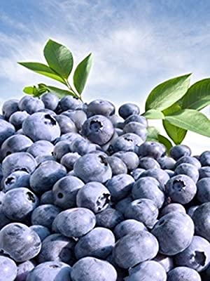 300+ Blueberry Seeds! Highbush Mix Super Sweet and Huge Perennial Fruit!