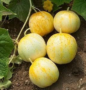 Cucumber Lemon D329 (Yellow) 25 Heirloom Seeds by David's Garden Seeds