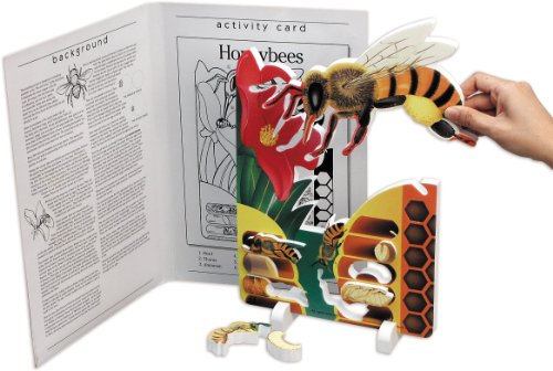 Book Plus Bee Life Cycle Foam Model
