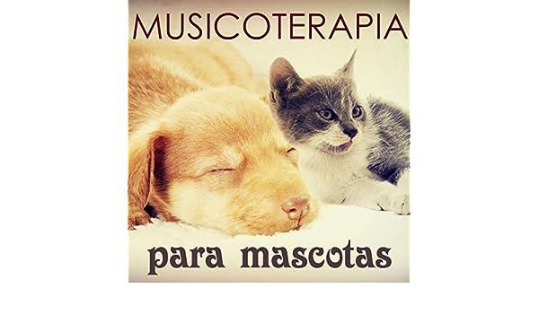 Musicoterapia Mascotas - Musica para Dormir para Perros, Gatos y Todos Animales (Aliviar el Estres) by Musicoterapia on Amazon Music - Amazon.com