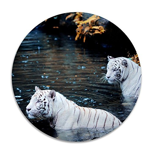 Reteone Animals White Tigers Swimming Anti-slip Coral Velvet Round Area Rugs Memory Foam Floor Carpets Mats 15.75 Inch Diameter Bedroom Rug Yoga Chair Mat Doormat (Edmonton Rugs Ikea)