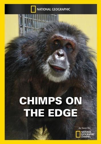 Artist Edge - Chimps on the Edge