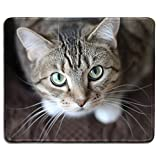 dealzEpic - Animal Art Mousepad - Natural Rubber Mouse Pad Printed with A Cute Cat Looking Up - Stitched Edges - 9.5x7.9 inches