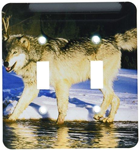 - 3dRose lsp_91390_2 North America, Use, Minnesota. Wolf (Canes Lupus) -Us24 Gje0026-Gabriel Jean Double Toggle Switch Multicolored