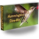 Hummingbird Slow-Mo Flipbook
