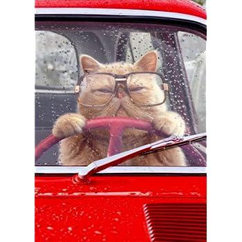 Amazon Cat Driving Car Avanti Funny Birthday Card Office