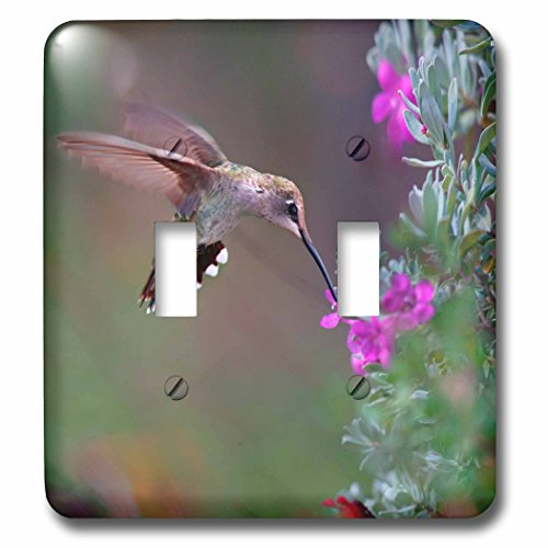 3dRose Danita Delimont - Hummingbirds - Female Ruby-throated Hummingbird drinking nectar, Texas, USA - Light Switch Covers - double toggle switch - Nectar Female