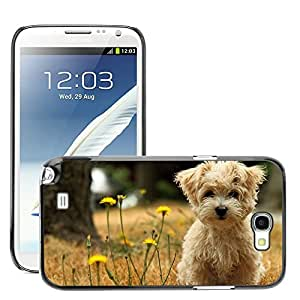 Hot Style Cell Phone PC Hard Case Cover // M00046053 animals pets silk havana dog // Samsung Galaxy Note 2 N7100