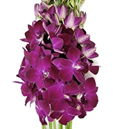 Fresh Flowers -10 Deep Purple Dendrobium Orchids
