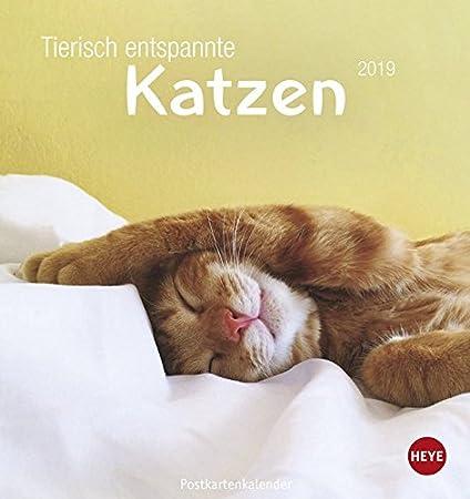 Heye Animales isch relajada Gatos Gatos de postal Calendario 2019 22832