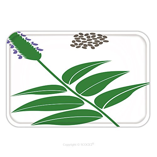 Flannel Microfiber Non Slip Rubber Backing Soft Absorbent Doormat Mat Rug Carpet Chia Branch And Chia Seeds Isolated On White Background 50586851 For Indoor Outdoor Bathroom Kitchen Workstations