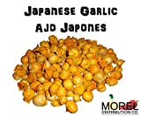 Japanese Garlic//Ajo Japones (100% Natural!!) Different Weights: (1 Lb, 2 Lbs, 5 Lbs, 10 Lbs, and 20 Lbs) (10 Lbs)