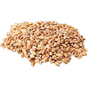 Food to Live Hard Red Wheat Berries (Sprouting for Wheatgrass) (50 Pounds)