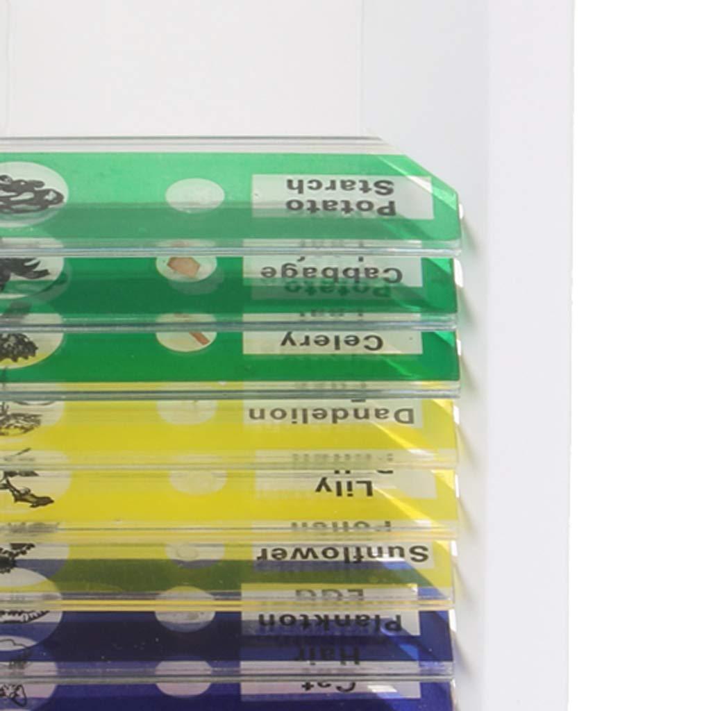 Gazechimp 12 Piezas Toboganes de Microscopio Preparados Secciones de Muestra Biol/ógicas Juguete Educativo para Ni/ños