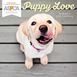 Graphique Puppy Love ASPCA Wall Calendar - 16-Month 2019 Calendar, 12''x12'' w/ 3 Languages, 4-Month Preview, Marked Holidays, Proceeds from Purchase Go to ASPCA