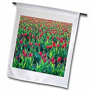 Danita Delimont - Flowers - USA, Washington, Skagit Valley. Tulip fields - US48 JME0348 - John and Lisa Merrill - 12 x 18 inch Garden Flag (fl_95782_1)